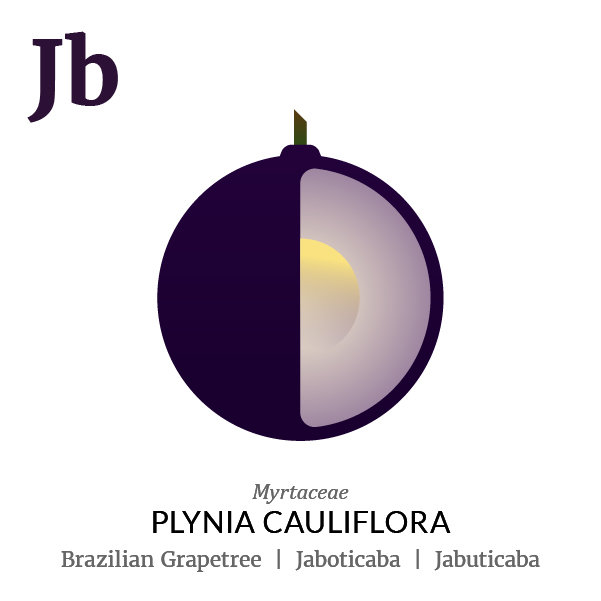 Brazilian grapetree Jaboticaba fruit icon, family, species and names, illustration by Francesco Faggiano, project by Isleta Design Studio