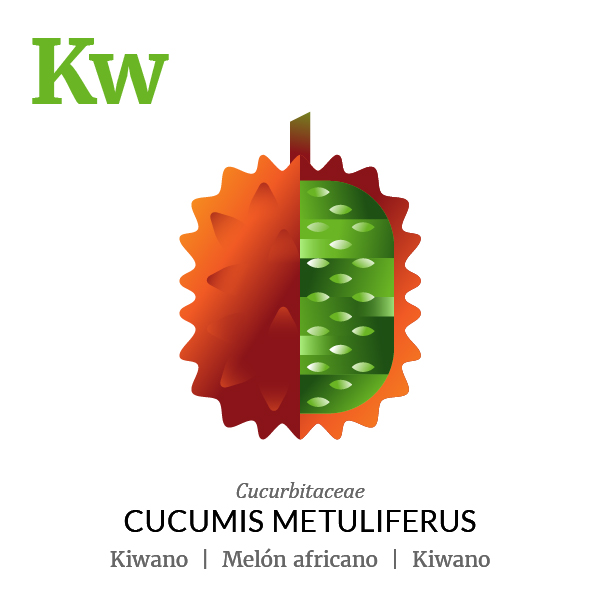 African melon Kiwano fruit icon, family, species and names, illustration by Francesco Faggiano, project by Isleta Design Studio