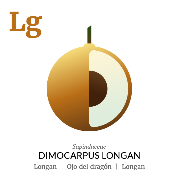 Longan fruit icon, family, species and names, illustration by Francesco Faggiano, project by Isleta Design Studio