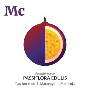 Passion fruit Maracuya fruit icon, family, species and names, illustration by Francesco Faggiano, project by Isleta Design Studio