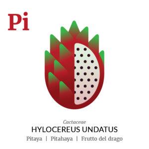 Pitaya Pitahaya fruit icon, family, species and names, illustration by Francesco Faggiano, project by Isleta Design Studio