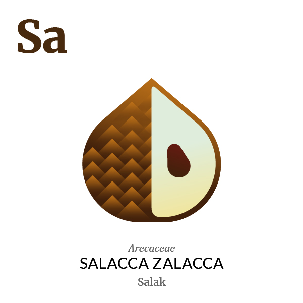 Salak fruit icon, family, species and names, illustration by Francesco Faggiano, project by Isleta Design Studio