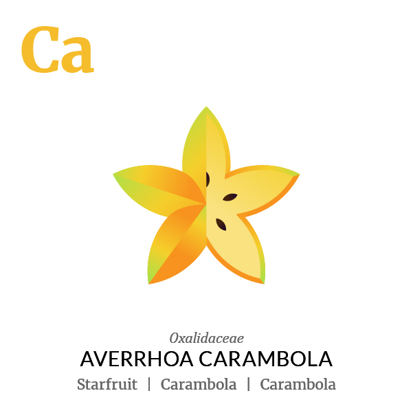 Starfruit Carambola fruit icon, family, species and names, illustration by Francesco Faggiano, project by Isleta Design Studio