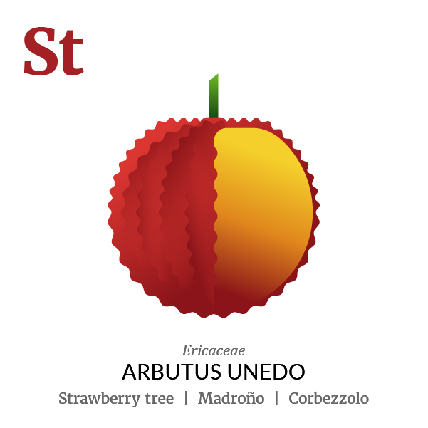 Strawberry tree fruit icon, family, species and names, illustration by Francesco Faggiano, project by Isleta Design Studio
