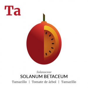 Tamarillo fruit icon, family, species and names, illustration by Francesco Faggiano, project by Isleta Design Studio