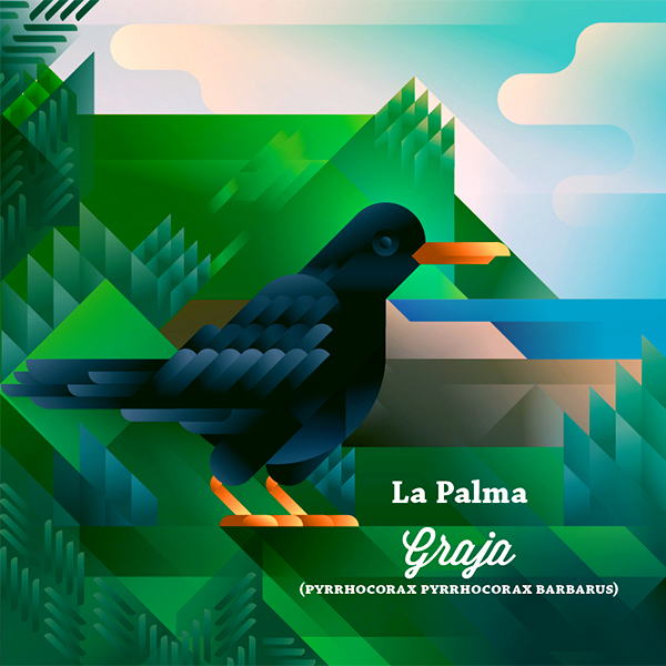 Graja crow bird next to a cliff, symbol of La Palma island, art print illustration by Francesco Faggiano illustrator
